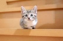 階段に登る子猫