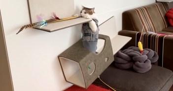 懸垂する猫