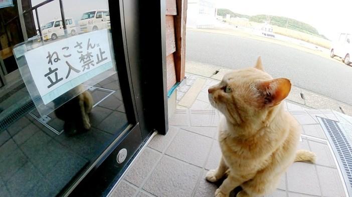 張り紙を見る猫