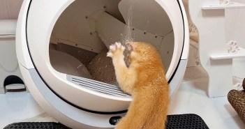 自動猫トイレで遊ぶ子猫