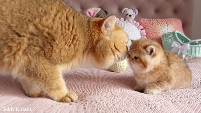 挨拶を交わす猫達