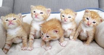 ガレージで保護された子猫達