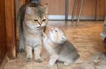 ミルクが飲みたい子猫