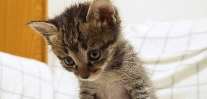 しょんぼりしている子猫