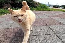 一直線に近づいてきた猫
