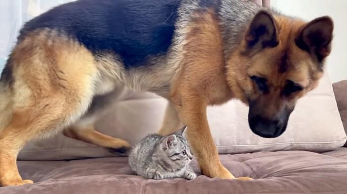 子猫と遊びたい犬