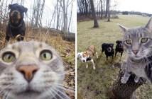 自撮り好きの猫さん