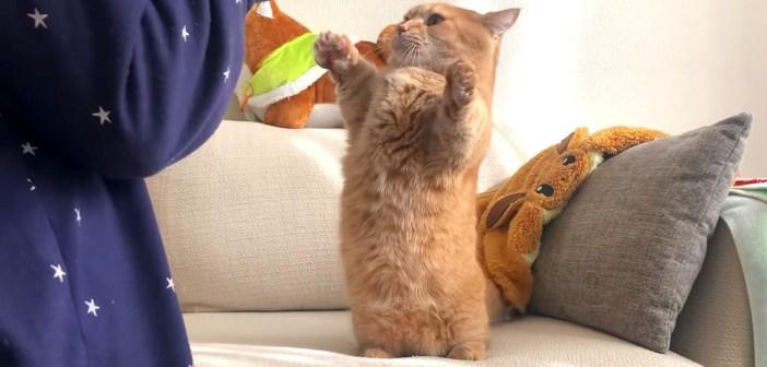 立ち上がった猫