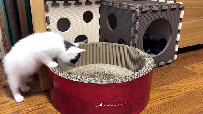 爪研ぎが気になる子猫