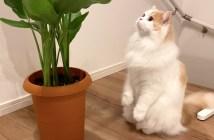 地震後の猫