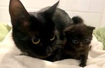 子猫を受け入れた保護猫