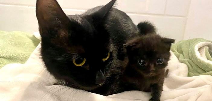 独りぼっちの迷子の子猫と出会った母猫。温かく子猫を迎え入れて、我が子と一緒にたくさんの愛情を注ぎ始める