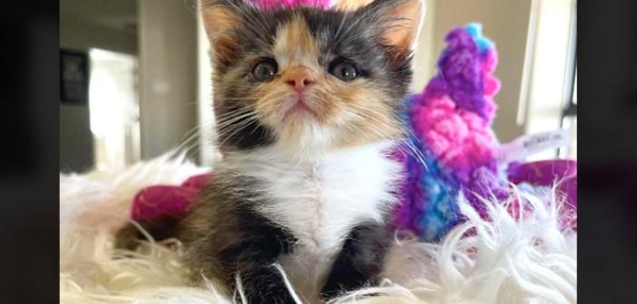 生まれて以来、多くの困難を乗り越えてきた子猫。非常に小さかった子猫は、幸せいっぱいの猫へと生まれ変わる