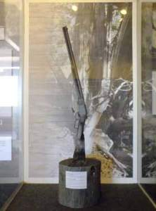 Courtesy photo A 133-year-old Winchester rifle found in the Great Basin National Park over a year ago is on display at the Lehman Caves Visitor Center.