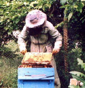 Пришло ли время заменить пчеловодный дневник компьютерной программой?