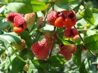 Семенной фонд вернет редкие растения в Серранию-де-Ронда (Испания)