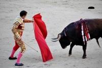 Бои быков в Испании оказались под угрозой запрета
