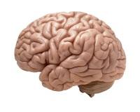 Европейская Комиссия организует два ключевых мероприятия в рамках Европейского месяца мозга