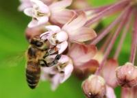 В Хорватии пчел научат обнаруживать мины