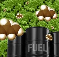 Великобритания выделяет средства на развитие биотопливной энергетики