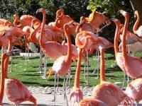 В Испании волонтеры посчитали птенцов фламинго