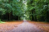 4 миллиона деревьев посадят в Великобритании в 2014 году