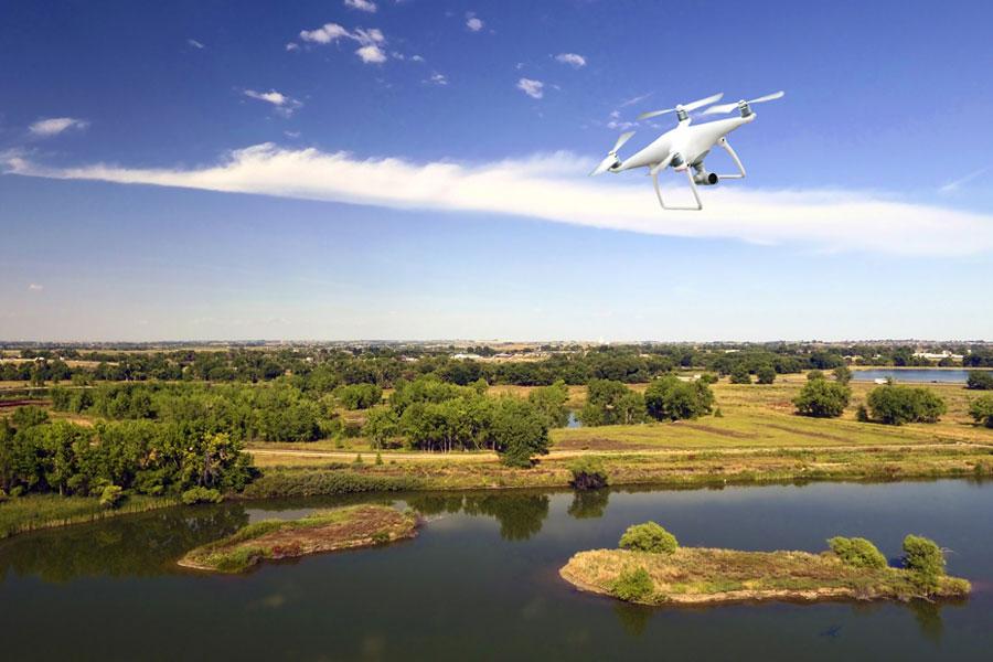 Этим летом жука-короеда в лесах Богемии и Баварии будут искать дроны