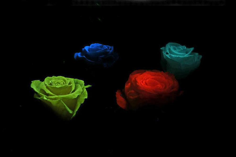 В Венгрии вывели люминесцентный цветок