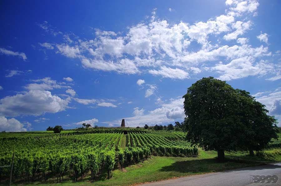 Правила виноделов: личный опыт выпускницы магистратуры по виноделию Erasmus Mundus