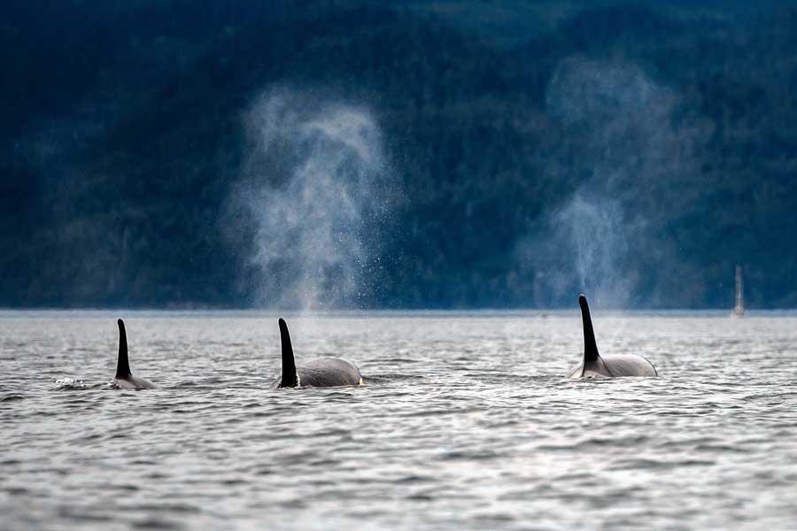 В Средиземном море китов избавят от шума