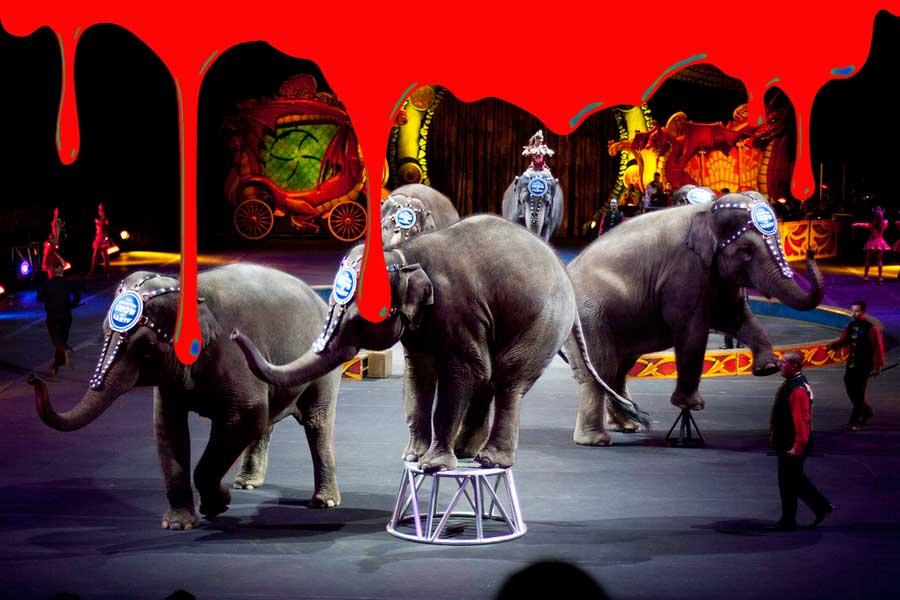 Почему почти во всей Европе уже нельзя увидеть животных в цирке