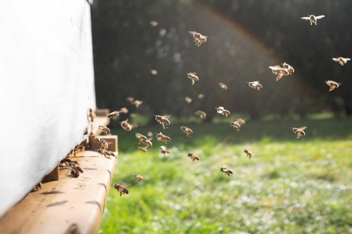 Словения собирается подарить всем странам Евросоюза пчел, когда займет место председателя Совета ЕС