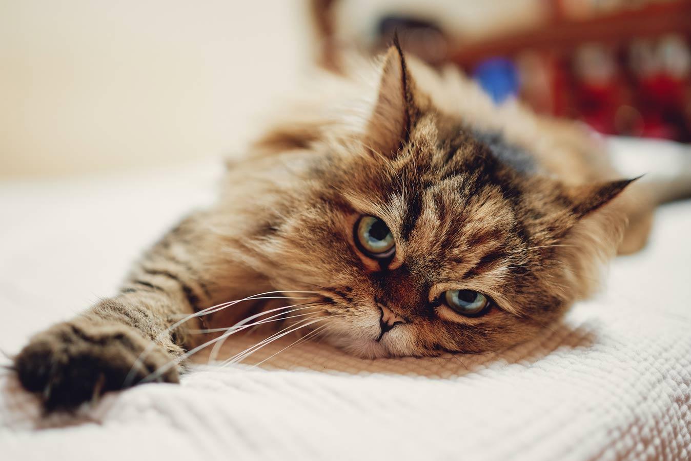 Даже кошки страдают от карантина, выяснили бельгийские ученые