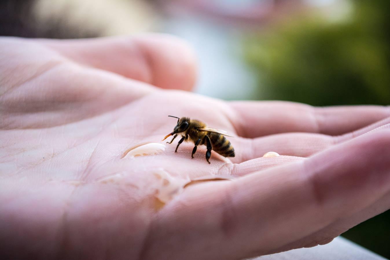 В студенческое общежитие Вены заселились 200 тысяч пчел