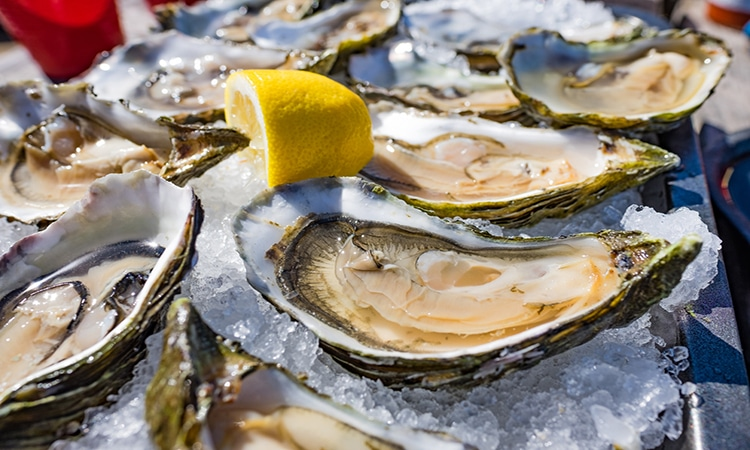 Ostras ou oysters