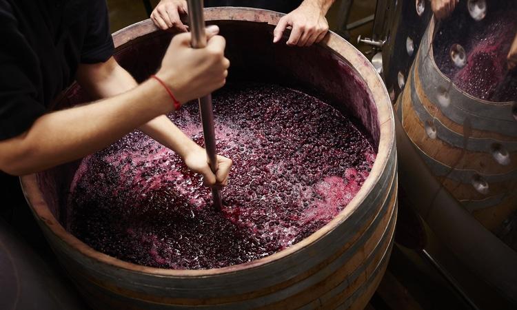 Produção de vinho na Europa