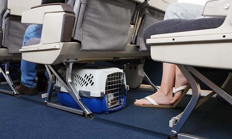 Guia para viajar com animais para Europa