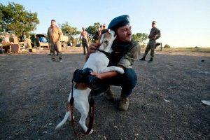 hromadske-hurniak-3VH dog