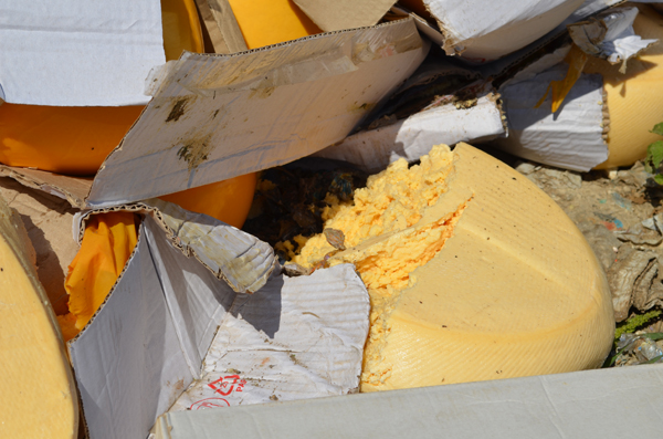 Destruction of Putin-sanctioned cheese in Belgorod oblast of Russia (Image: social media)
