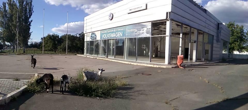 Only goats are grazing weeds at the robbed and abandoned Volkswagen dealership in Russian-occupied Luhansk, Ukraine. September 2016 (Image: Denys Kazansky, deniskazansky.com.ua)