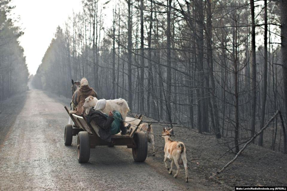 Residents of the burnt-out village of Magdin and their cattle move to relatives in the village of Lichmani