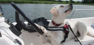 Urlaub mit Hund auf Usedom, Hund im Boot, Usedom, Peene, Bootsverleih, Achterwasser