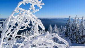 bayerischer-wald_winter