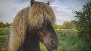 Pferd_Eifel