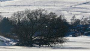 winter_hügel_ski