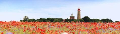 Getreidefeld mit Mohnblumen auf der Insel Rügen