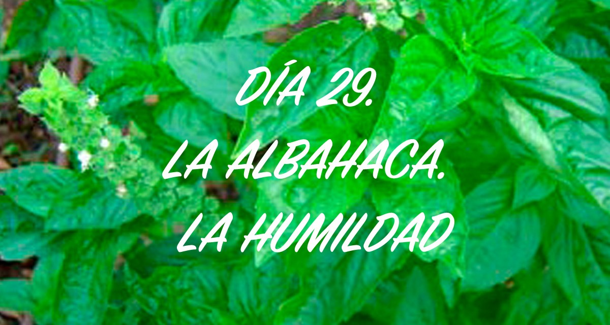 DÍA 29. LA ALBAHACA. LA HUMILDAD.