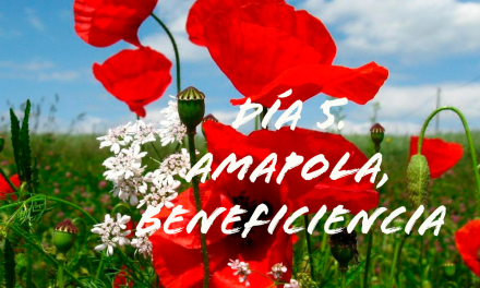 DÍA 5. AMAPOLA. BENEFICENCIA
