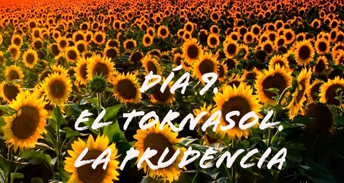 DÍA 9. EL TORNASOL. LA PRUDENCIA