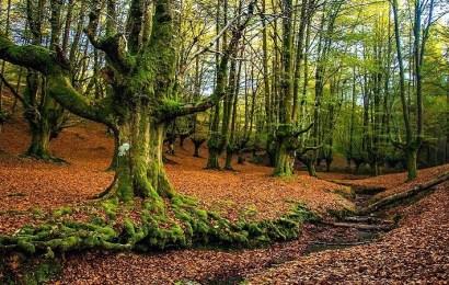 Hayedo de Otzarreta: el bosque encantado del País Vasco